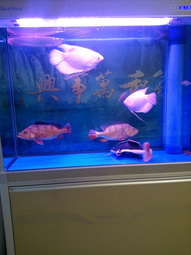 没有龙青海鱼友圈 合肥观赏鱼 合肥龙鱼第5张
