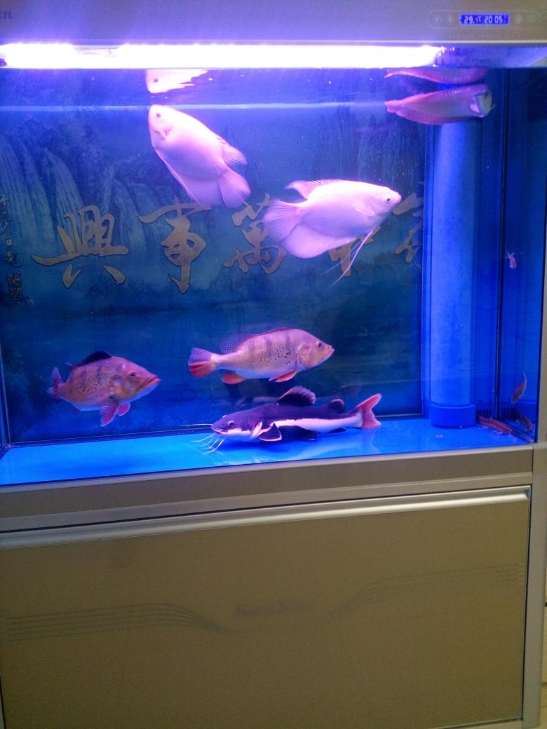 没有龙青海鱼友圈 合肥观赏鱼 合肥龙鱼第3张