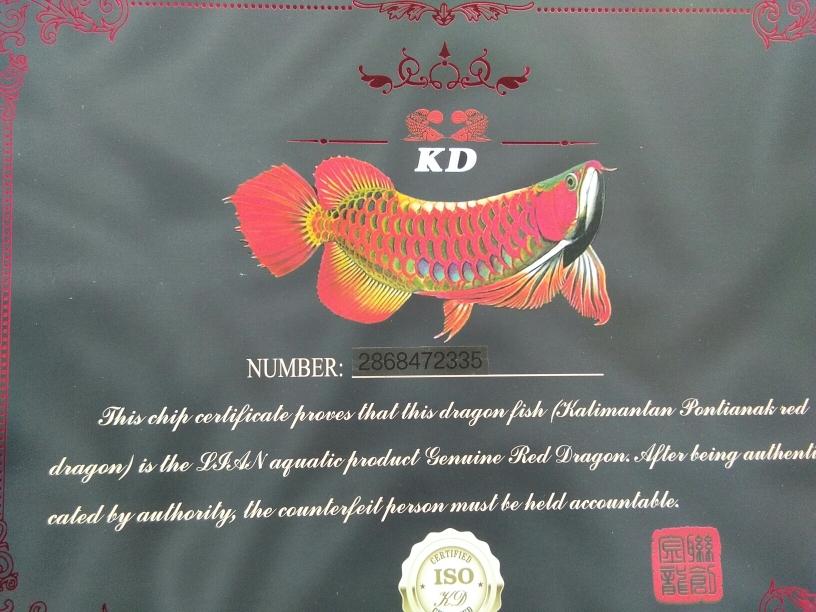不地道龙鱼 长沙观赏鱼 长沙龙鱼第2张