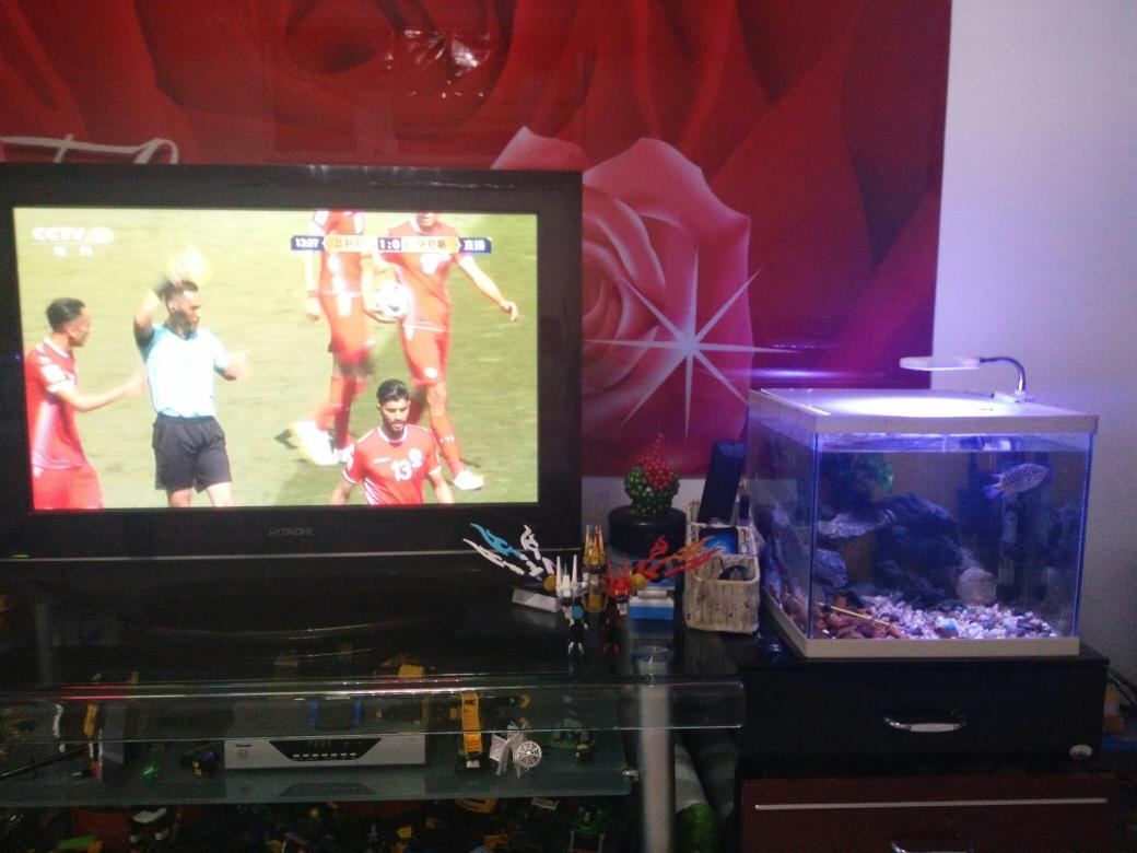鱼也在看足球内蒙古鱼友圈 延安龙鱼论坛