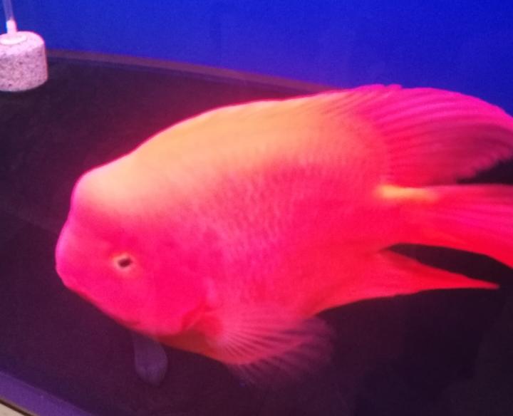 早上好晒晒我的红财神 西安龙鱼论坛 西安博特第2张