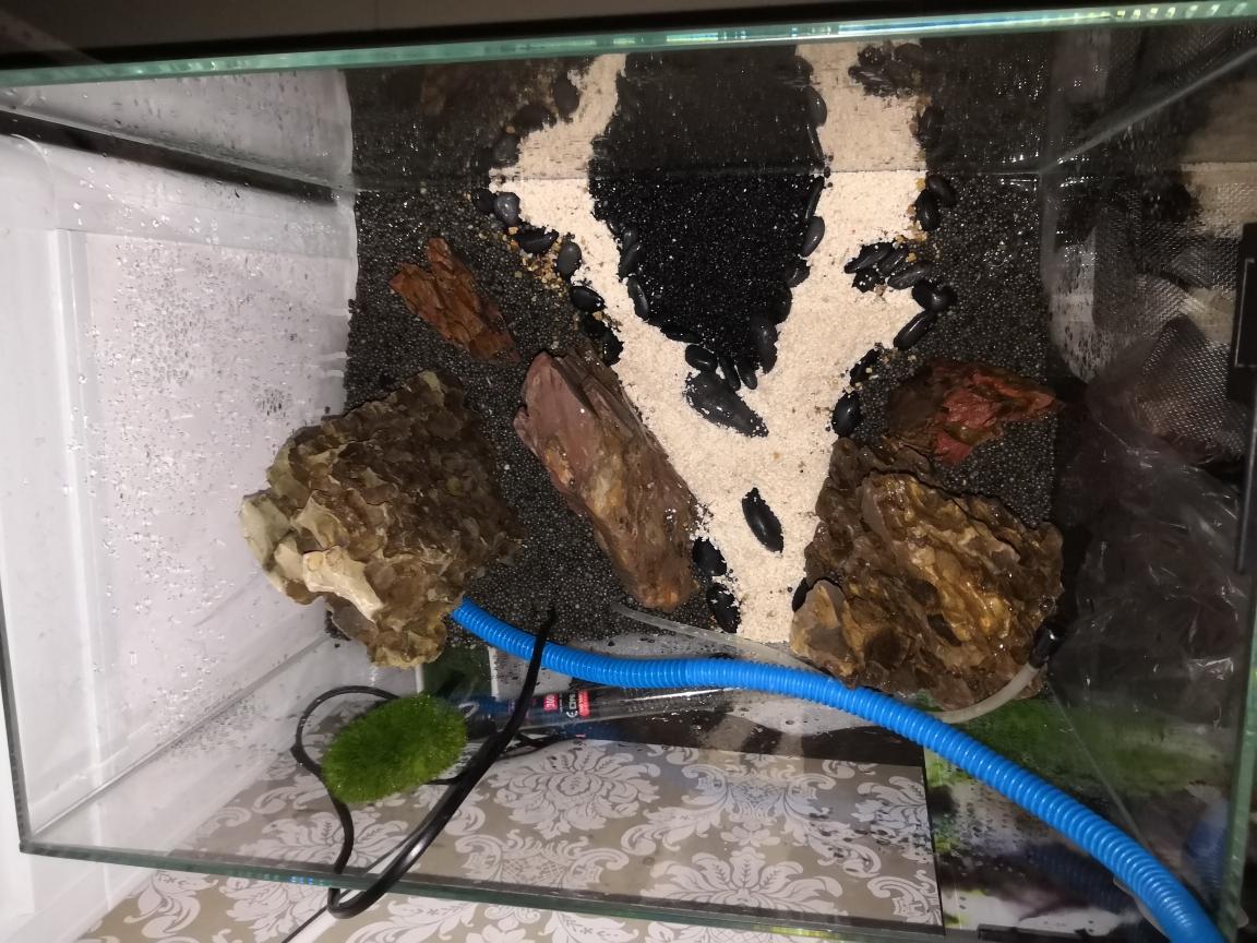 45的草缸怎么优化 昆明水族批发市场 昆明龙鱼第2张