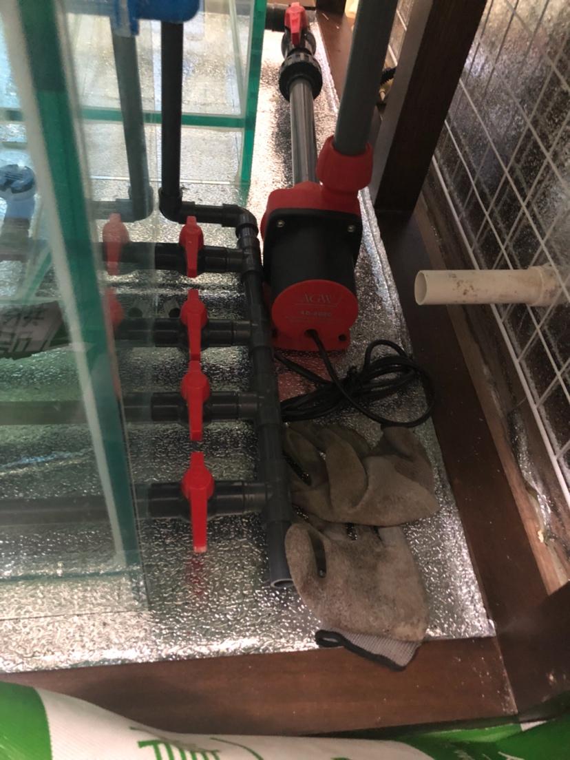 我的自制鱼缸之路(烟台水族馆三) 烟台观赏鱼 烟台龙鱼第11张