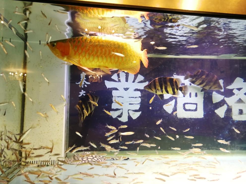 出门比赛几天买两斤鲮鱼给鱼儿们做自助餐 温州水族批发市场 温州龙鱼第5张