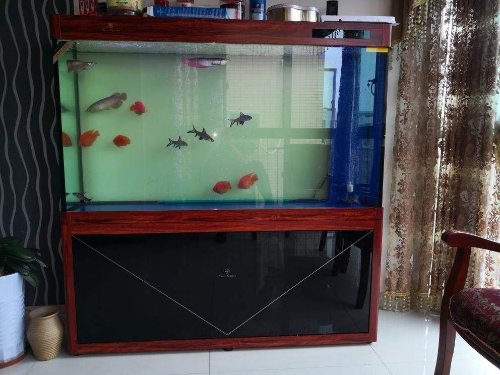 食量太小了泥鳅吃两块 西宁观赏鱼 西宁龙鱼第1张