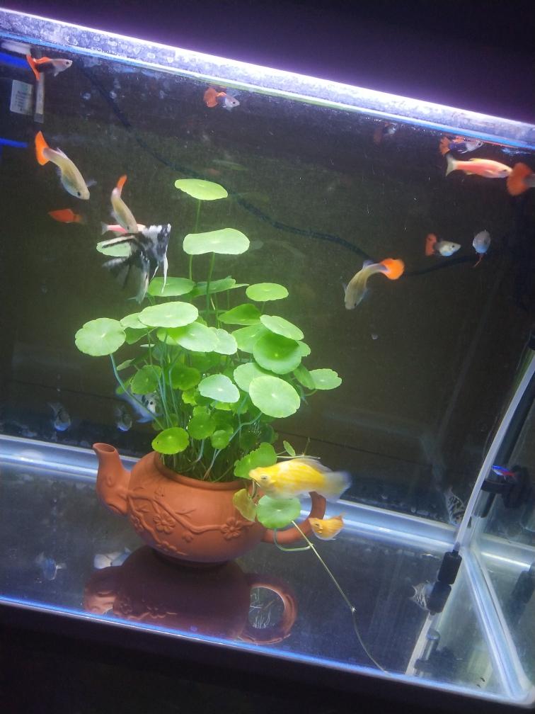 乱养龙鱼 昆明龙鱼论坛 昆明龙鱼第3张