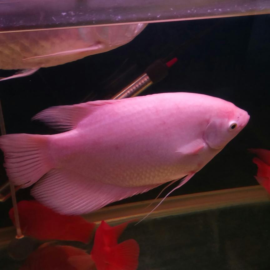 开缸五个月记录 西安观赏鱼信息 西安博特第3张