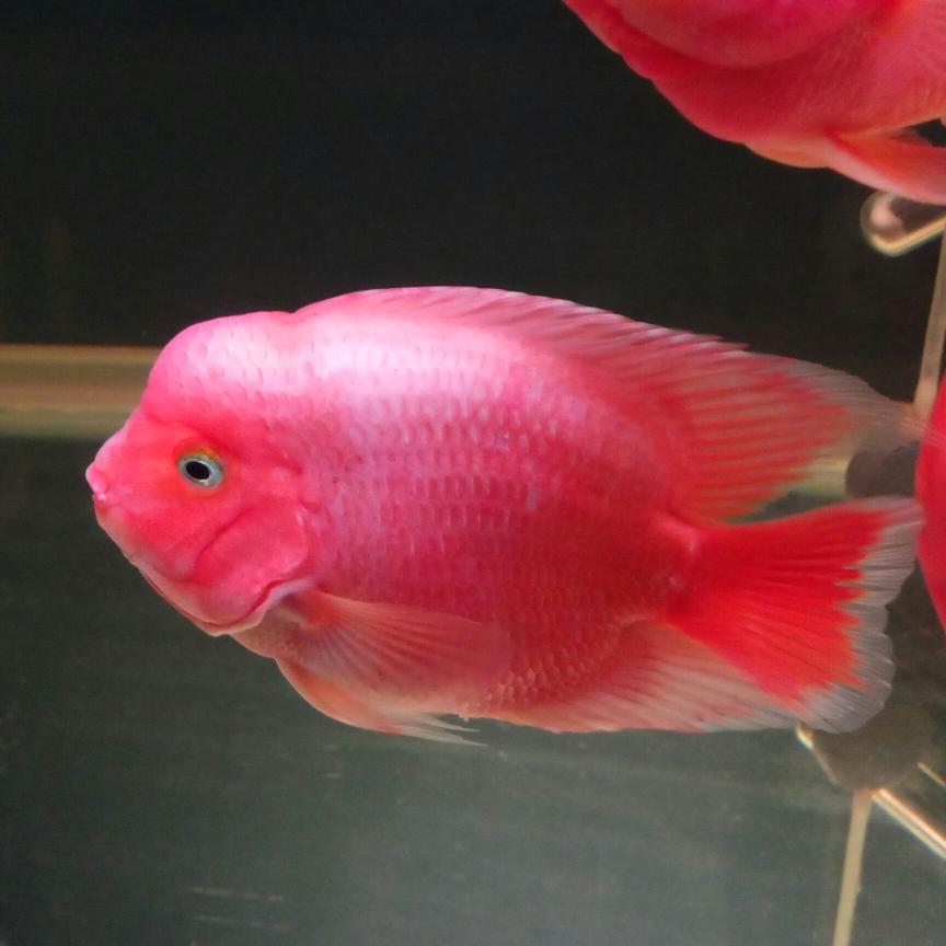 开缸五个月记录 西安观赏鱼信息 西安博特第7张