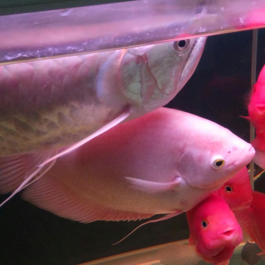 开缸五个月记录 西安观赏鱼信息 西安博特第5张