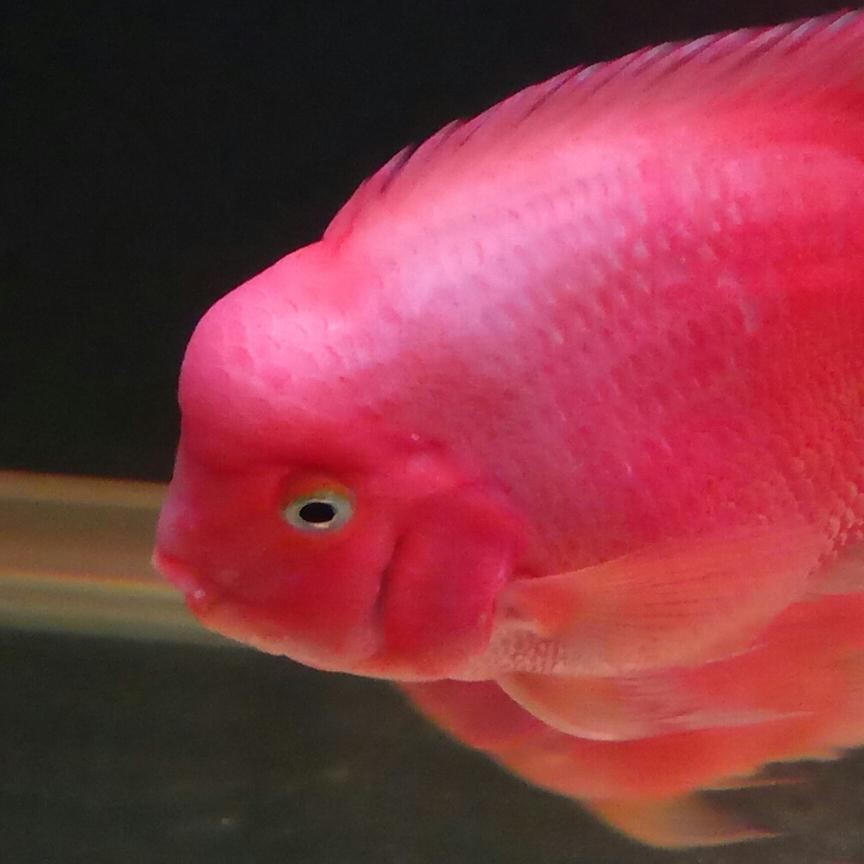 开缸五个月记录 西安观赏鱼信息 西安博特第4张