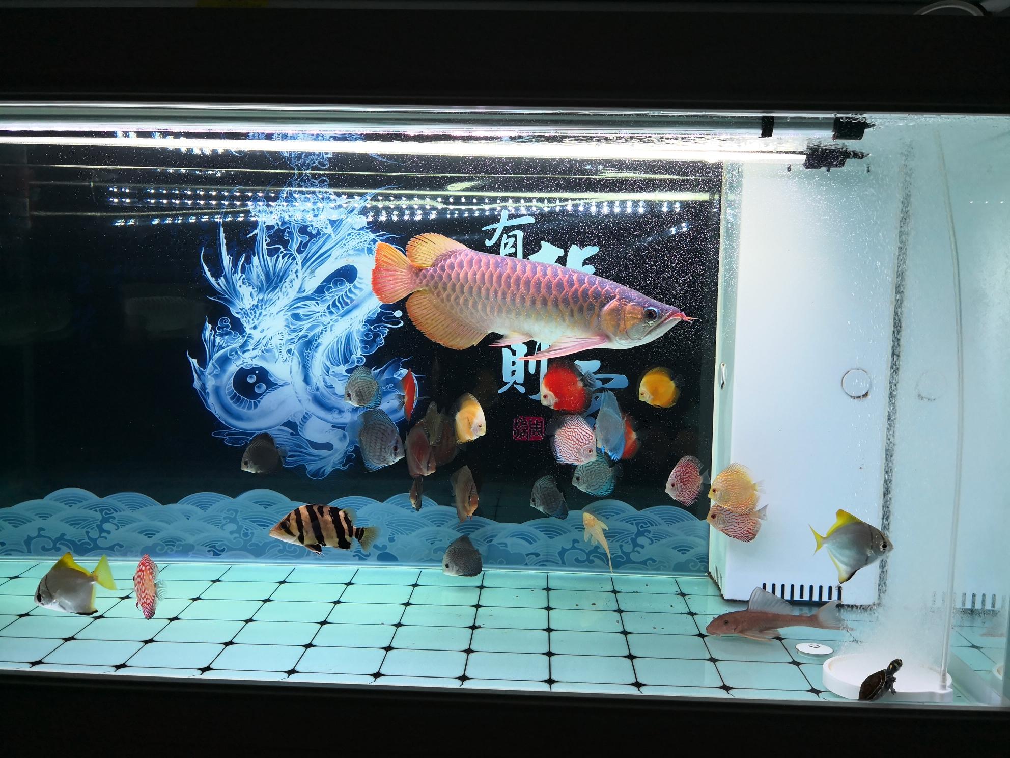 广州观赏鱼友贴吧七彩平时喂什么比较好
