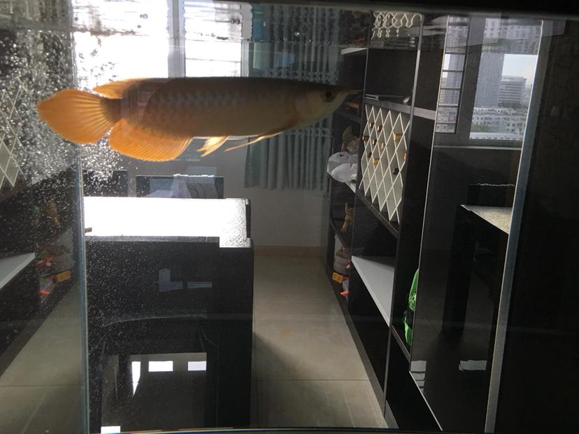 从心开始辽宁鱼友圈乌鲁木齐古玩城 乌鲁木齐水族批发市场 乌鲁木齐龙鱼第7张