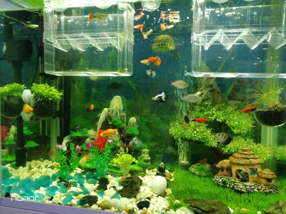 热带小鱼混养 西安观赏鱼信息
