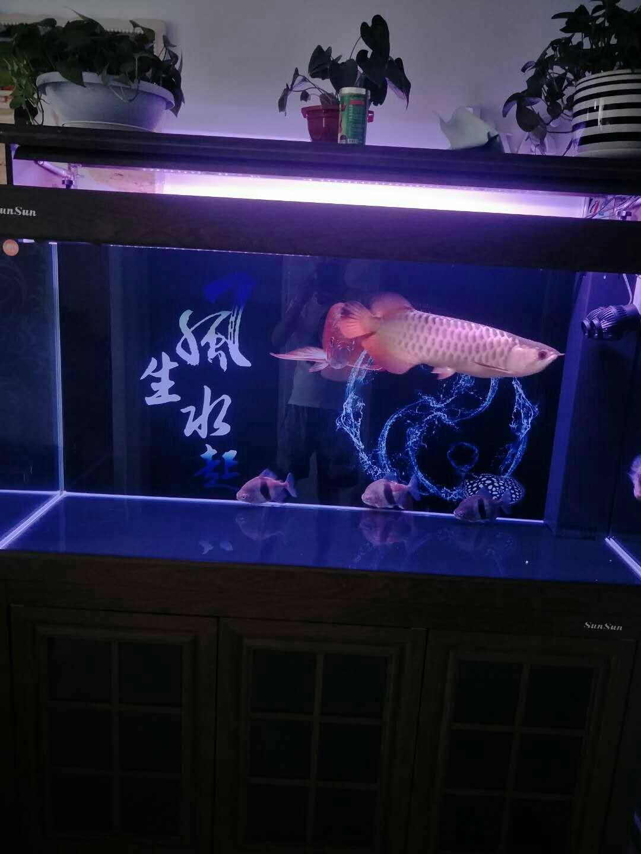 金龙罗汉热带鱼 天津龙鱼论坛 天津龙鱼第5张