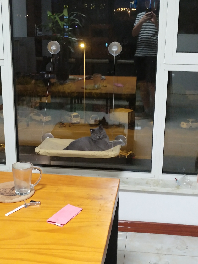 人靠衣衫猫靠毛 渭南水族批发市场 渭南龙鱼第2张