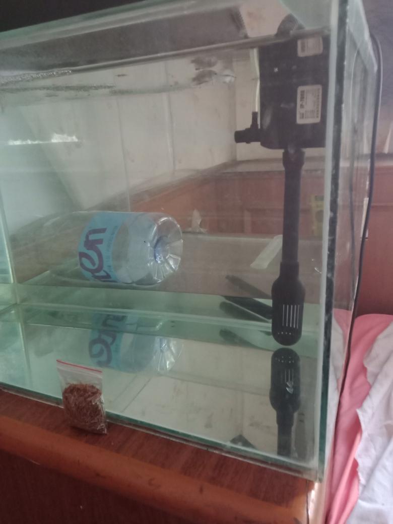 各位大神我这算是空气缸南京黑桃a鱼能长多大吗 南京水族批发市场 南京龙鱼第4张