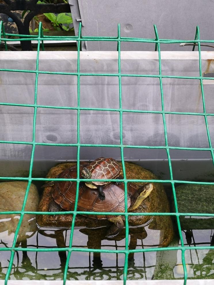 晒太阳喽两栖爬宠 温州水族批发市场 温州龙鱼第2张