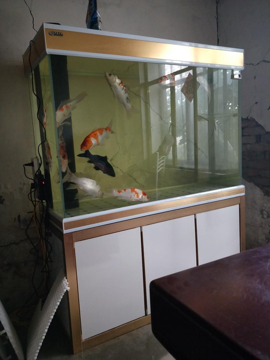 哈尔滨水族爱鱼不分条件观赏虾 哈尔滨龙鱼论坛