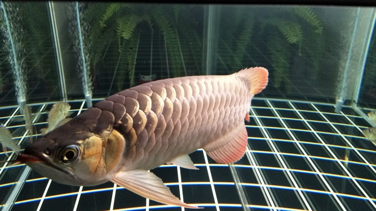 周末分享龙鱼 南京水族批发市场 南京龙鱼第3张