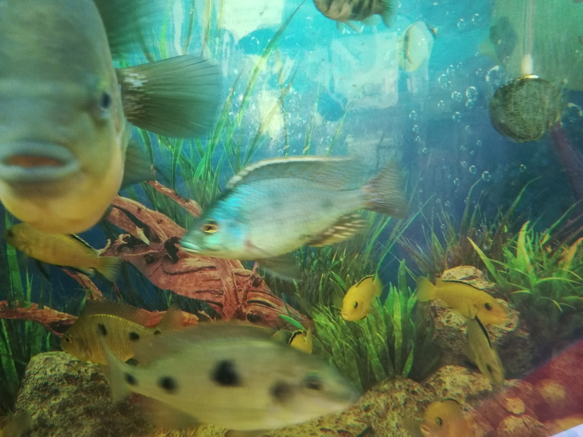 靓三点就是漂亮 南京水族批发市场 南京龙鱼第2张