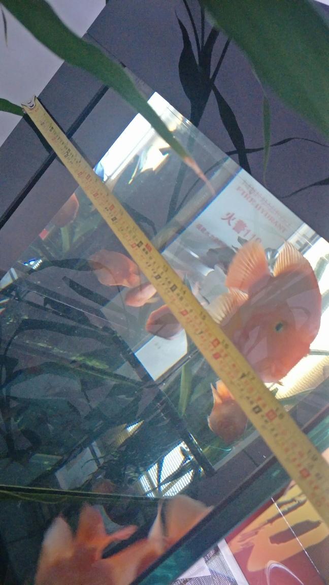 这宽度能养龙吗?? 哈尔滨龙鱼论坛 哈尔滨龙鱼第1张