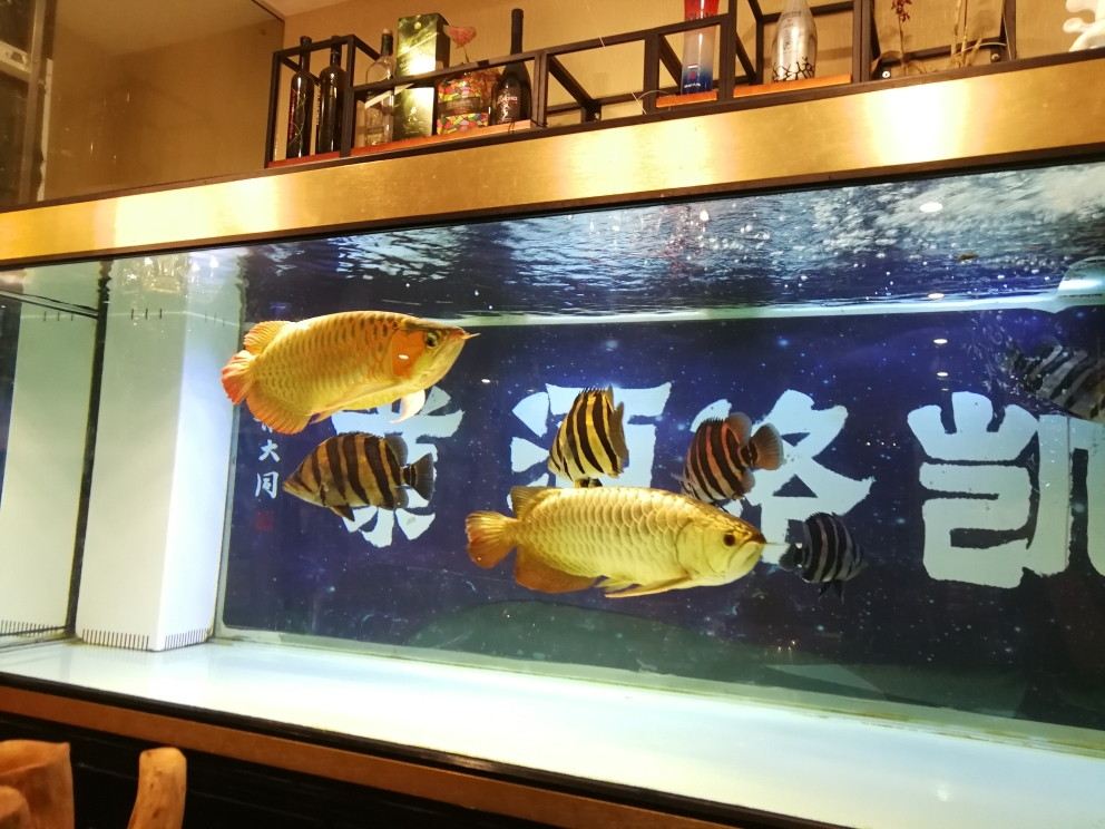 男人的鱼缸如同女人的衣柜永远都缺一条鱼 南昌水族批发市场 南昌龙鱼第7张
