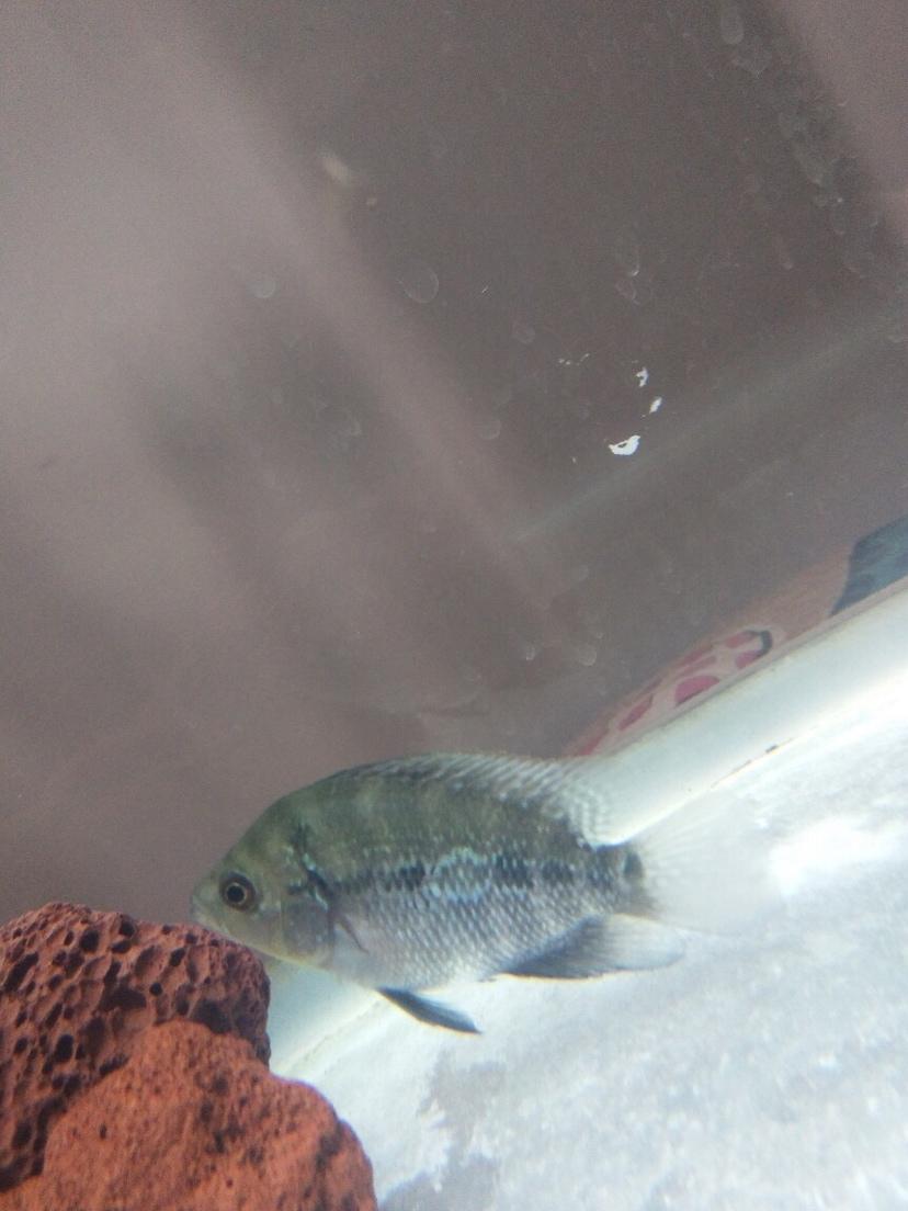 这是什么鱼谁知道?