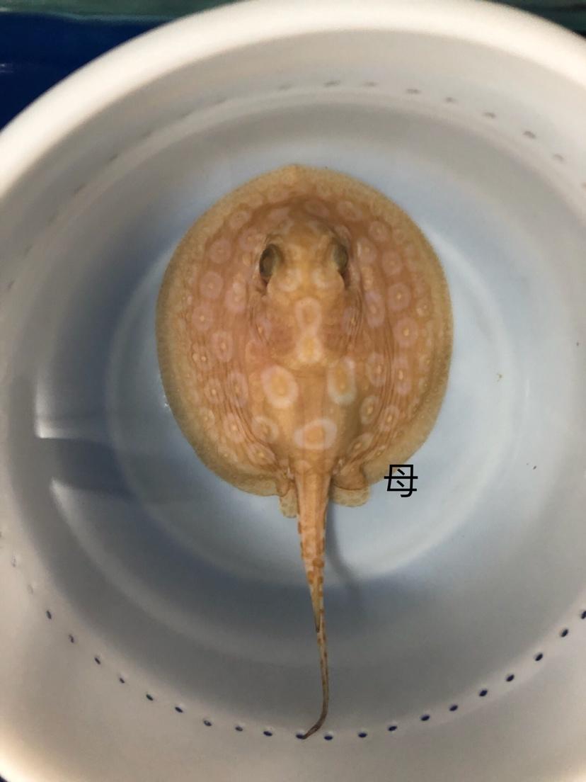 白子帝王凈泉魚場出品 吉林觀賞魚 吉林龍魚第6張