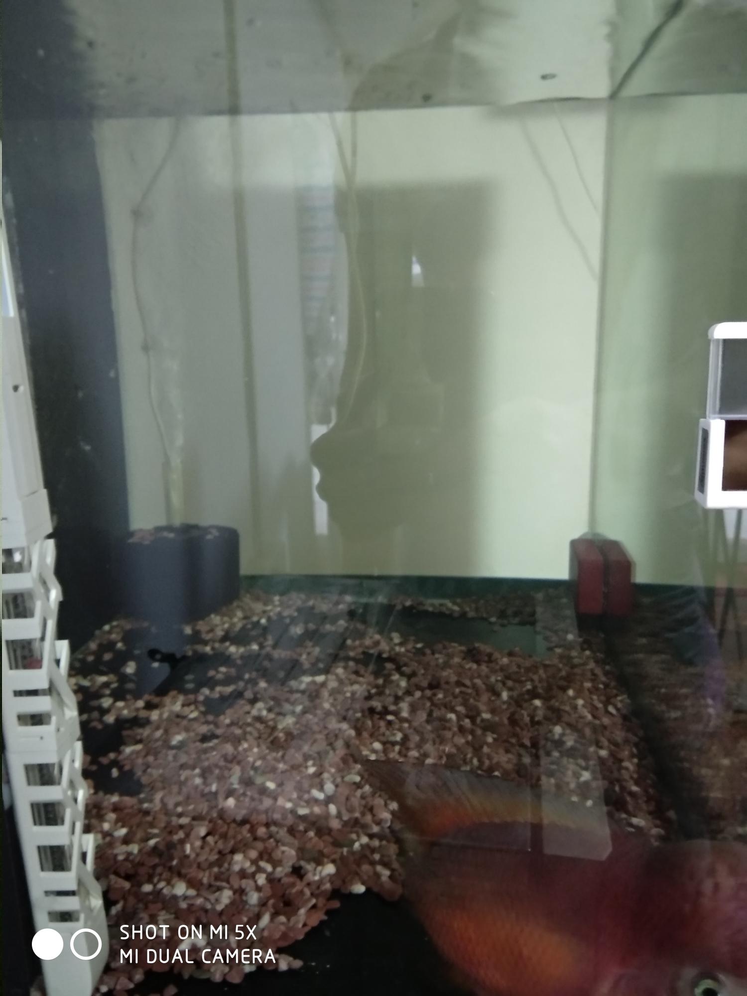 ZFISH水泵试用反馈 上海龙鱼论坛 上海龙鱼第11张