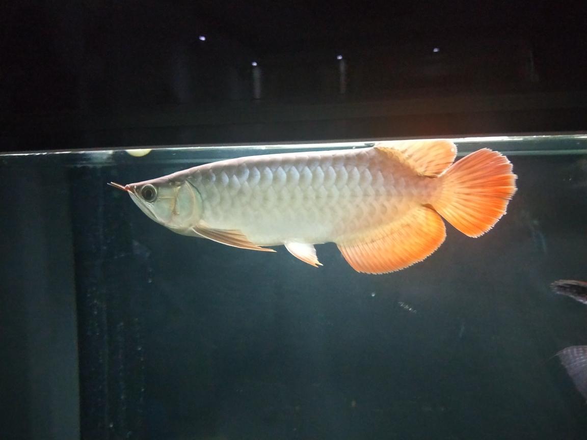 签到山西鱼友圈 北京观赏鱼