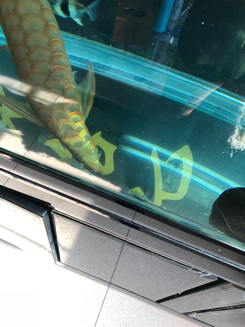 让我一次爱个够让你一次吃个够 西安观赏鱼信息 西安博特第1张