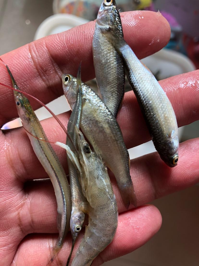 让我一次爱个够让你一次吃个够 西安观赏鱼信息 西安博特第8张