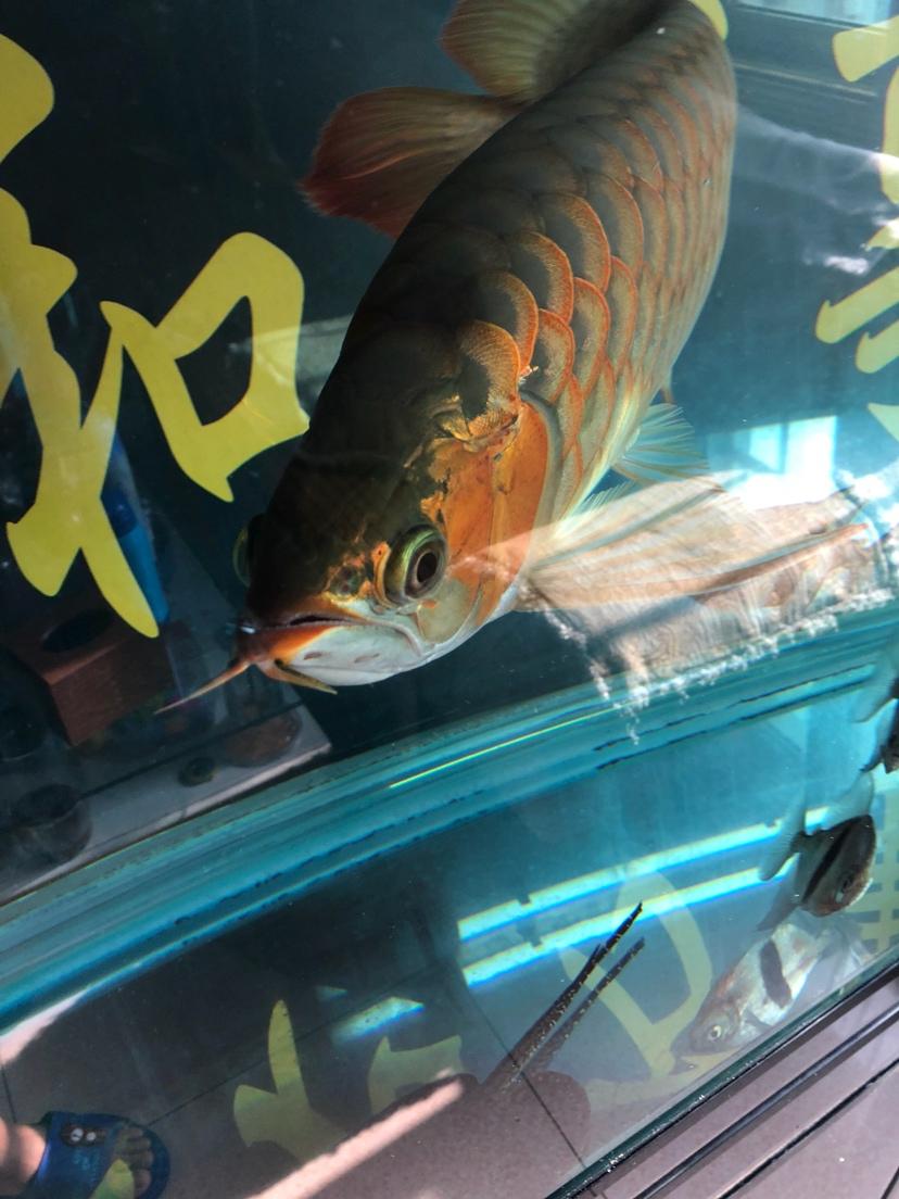 让我一次爱个够让你一次吃个够 西安观赏鱼信息 西安博特第9张