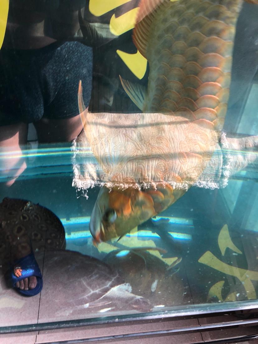让我一次爱个够让你一次吃个够 西安观赏鱼信息 西安博特第4张