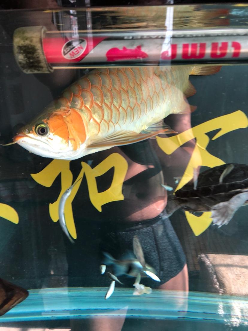 让我一次爱个够让你一次吃个够 西安观赏鱼信息 西安博特第7张