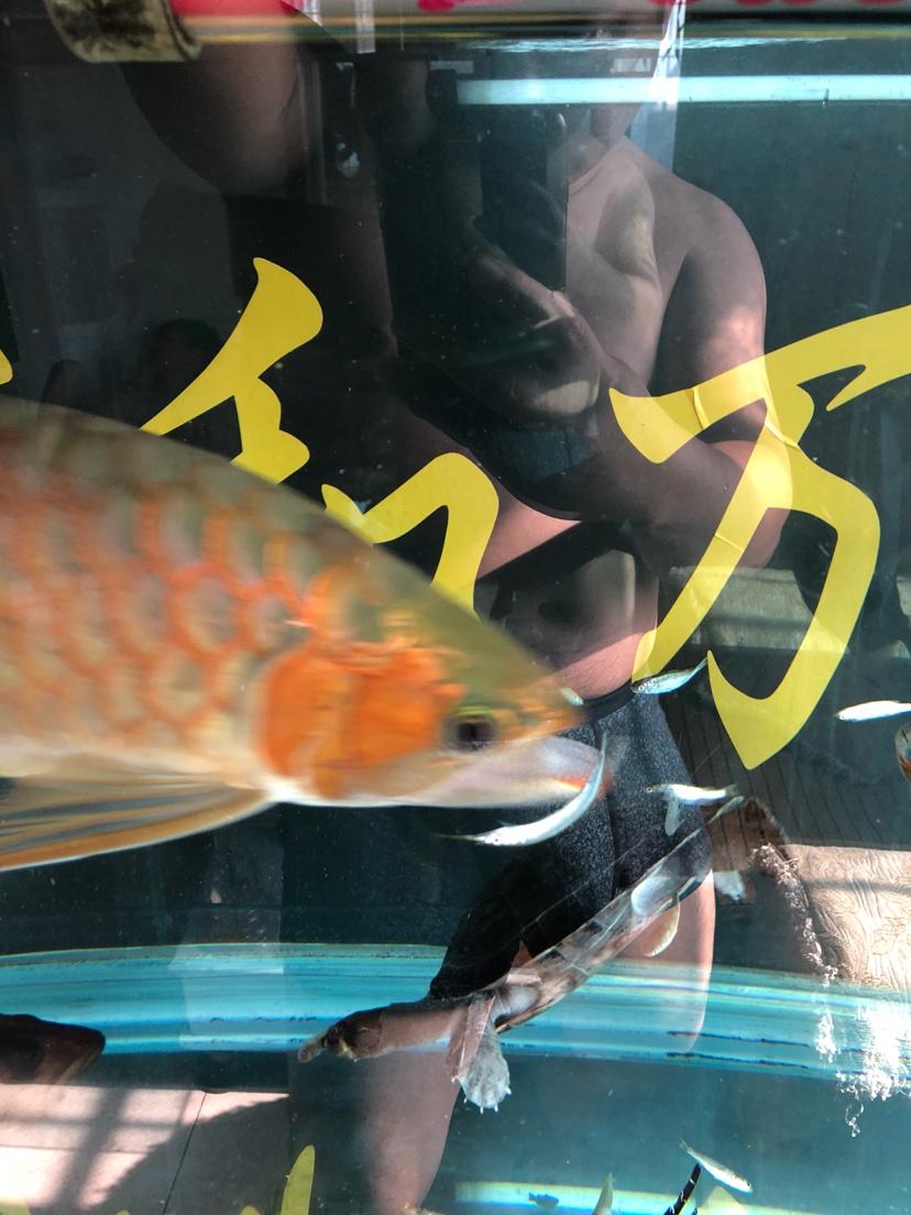 让我一次爱个够让你一次吃个够 西安观赏鱼信息 西安博特第6张