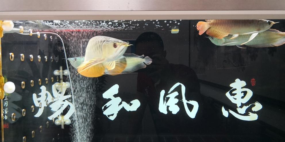 混养不易(脾气怪只能一条陪伴) 杭州龙鱼论坛 杭州龙鱼第6张