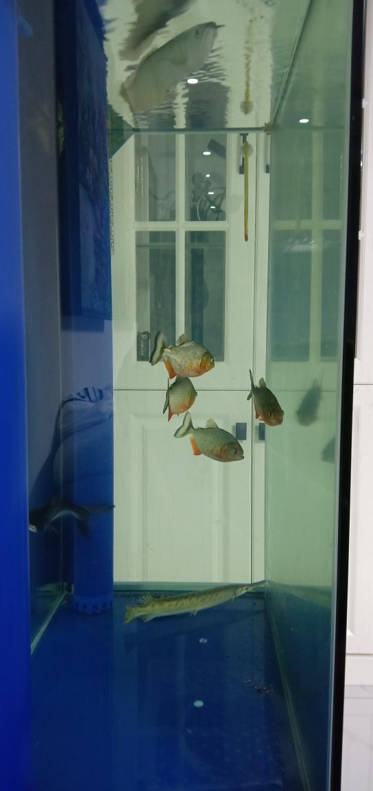 北京水族论坛空气缸么?龙鱼 北京龙鱼论坛 北京龙鱼第3张