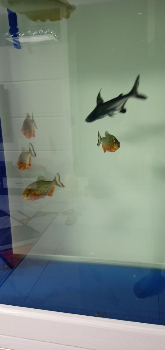 北京水族论坛空气缸么?龙鱼 北京龙鱼论坛 北京龙鱼第5张