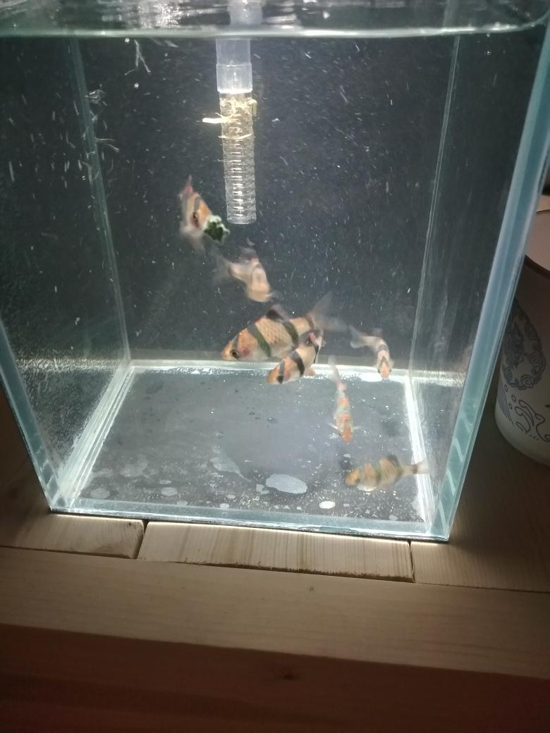 上一篇视频 虎皮的归宿 现在已经隔离 南京龙鱼论坛 南京龙鱼第1张
