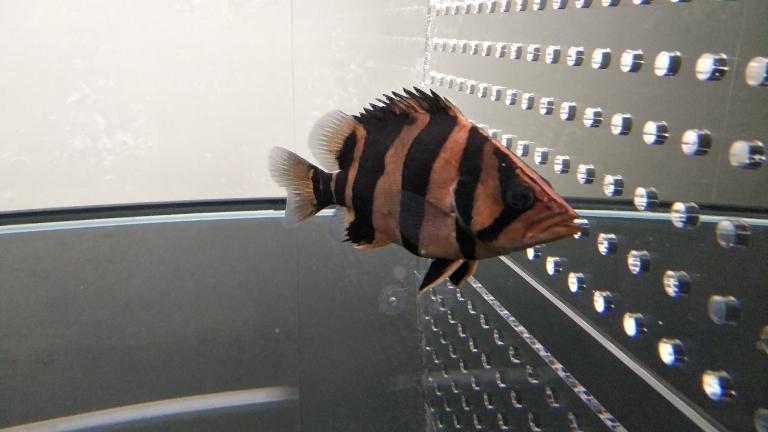 居然明了一下青海鱼友圈 合肥观赏鱼 合肥龙鱼第2张