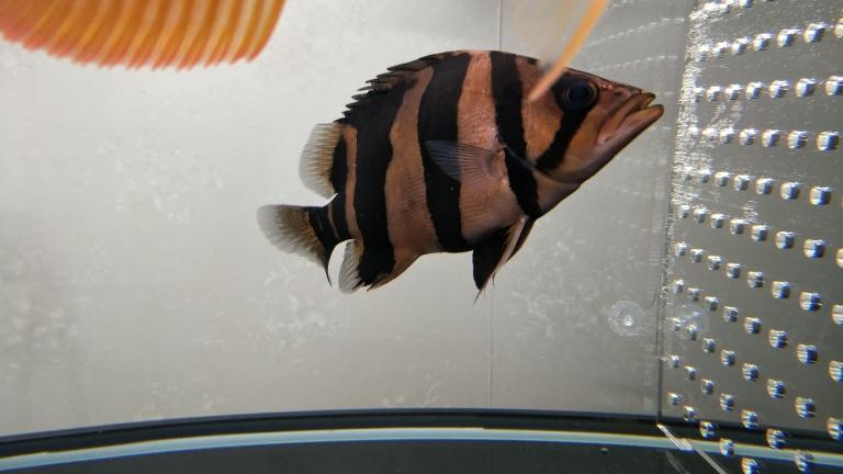 居然明了一下青海鱼友圈 合肥观赏鱼 合肥龙鱼第1张