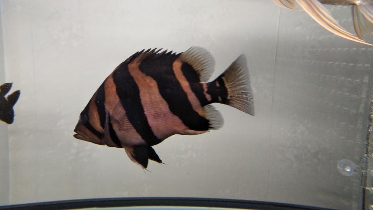 居然明了一下青海鱼友圈 合肥观赏鱼 合肥龙鱼第5张