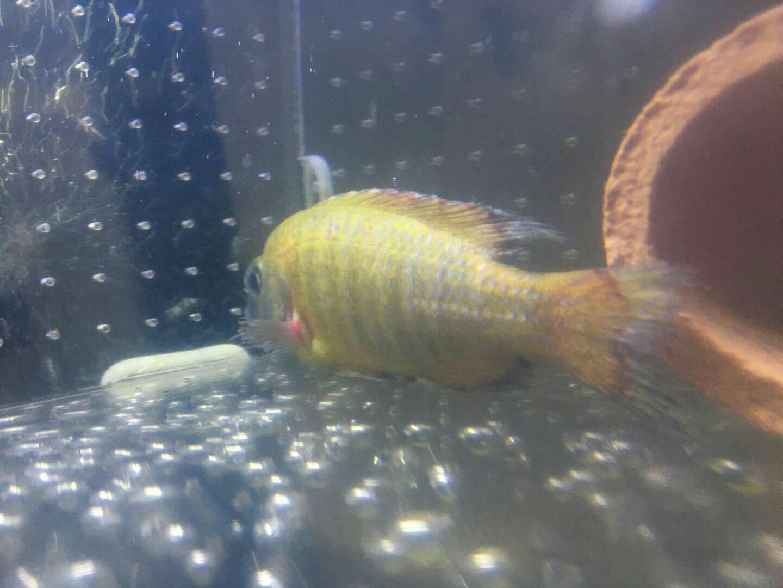 求助请看看小鱼这是啥病啊? 营口观赏鱼 营口龙鱼第4张