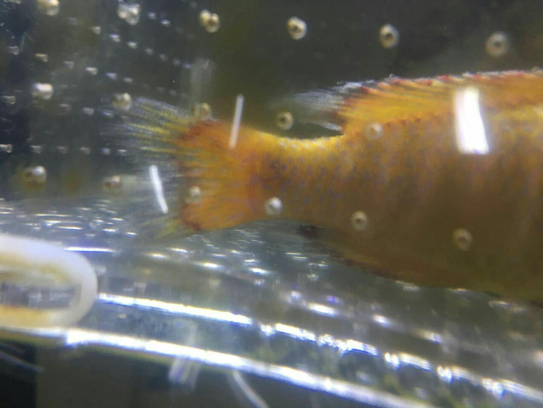 求助请看看小鱼这是啥病啊? 营口观赏鱼 营口龙鱼第3张