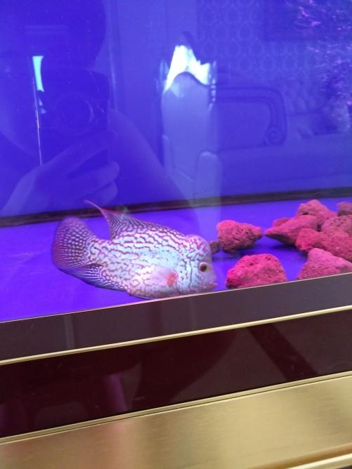 请各位鱼友看看品质 乌鲁木齐龙鱼论坛 乌鲁木齐龙鱼第4张