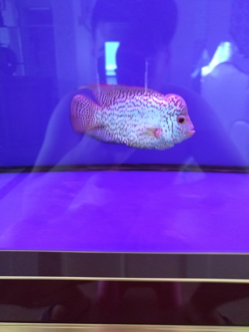 请各位鱼友看看品质 乌鲁木齐龙鱼论坛 乌鲁木齐龙鱼第5张