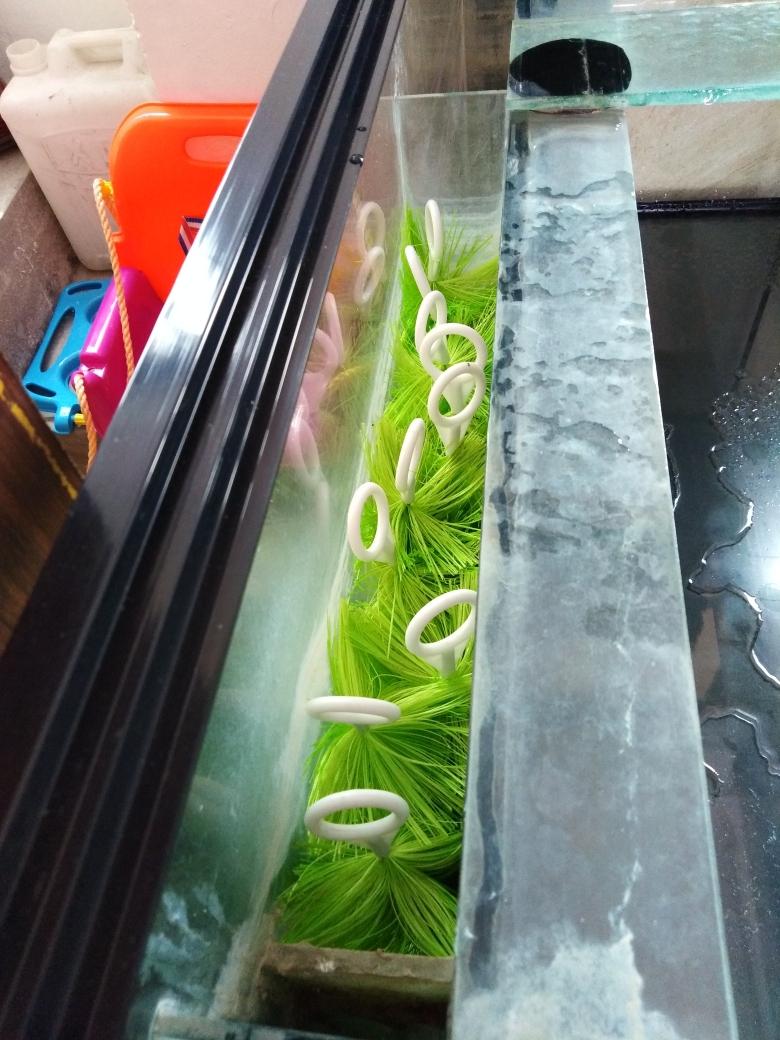 开缸养水中龙鱼 西宁观赏鱼 西宁龙鱼第3张