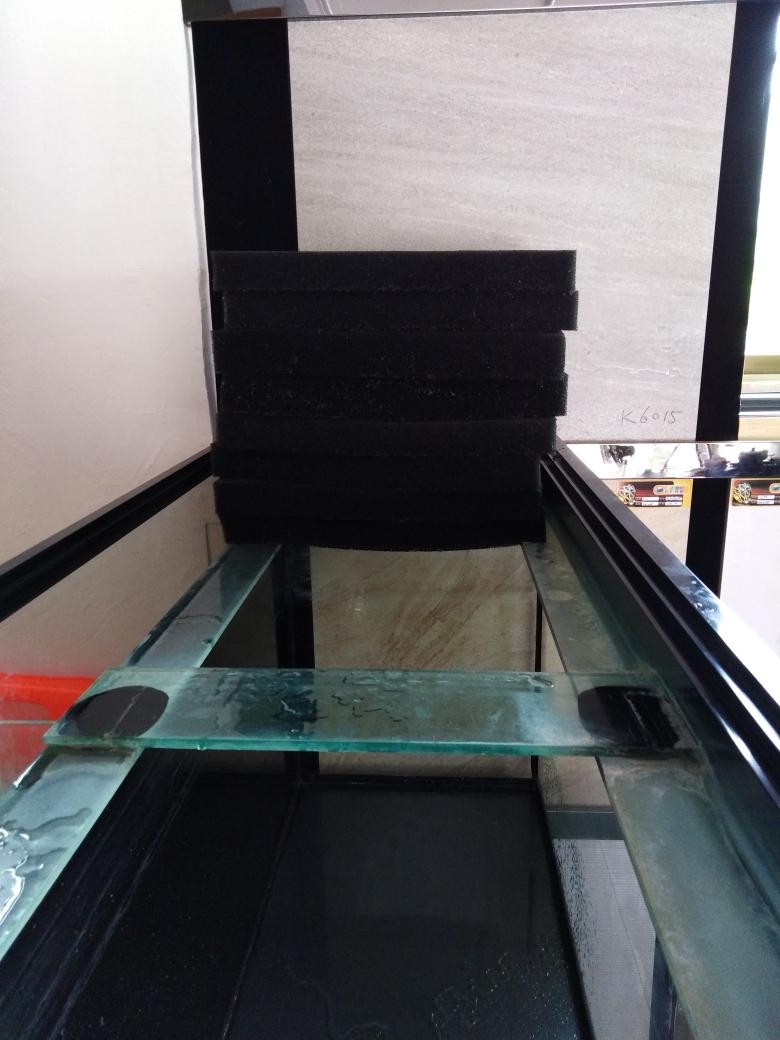 开缸养水中龙鱼 西宁观赏鱼 西宁龙鱼第2张