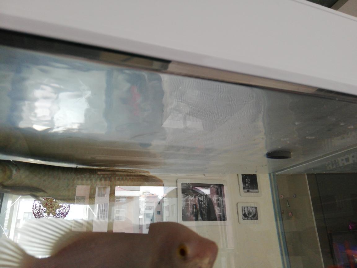 求解新疆鱼友圈 天津观赏鱼